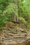 inställd tree royaltyfri foto