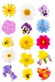 inställda blommahuvud Arkivbild