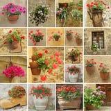 inställda blommakrukar Arkivbild