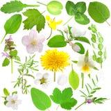 inställda blommaleaves royaltyfri fotografi
