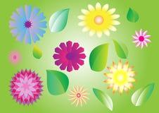 inställda blommaleaves Arkivbild