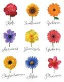 inställda blommor Royaltyfri Foto