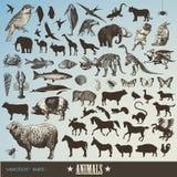 inställda djur stock illustrationer