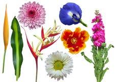 inställda färgrika blommor Fotografering för Bildbyråer