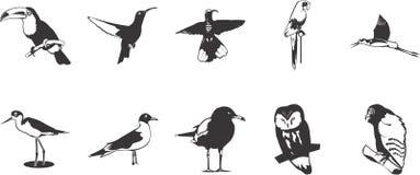 inställda fågelsymboler Royaltyfria Bilder
