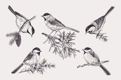 inställda fåglar vektor illustrationer