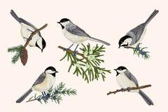 inställda fåglar royaltyfri illustrationer