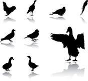 inställda fåglar Arkivbilder