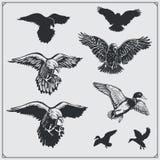 inställda fåglar Ravens, örnar och änder Royaltyfri Foto