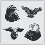 inställda fåglar Ravens och örnar Arkivbild