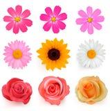 inställda härliga stora färgrika blommor vektor illustrationer