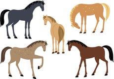 inställda hästar Royaltyfria Bilder