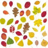 inställda höstliga olika leaves Royaltyfria Bilder