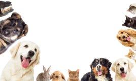 inställda husdjur royaltyfri bild