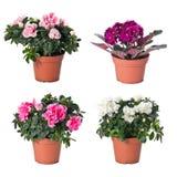 inställda inomhus växter för blomkrukar Royaltyfri Fotografi