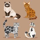 inställda katter också vektor för coreldrawillustration Arkivfoto