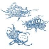 inställda kryp vektor illustrationer