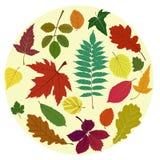 Inställda Leaves Royaltyfria Foton