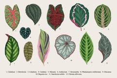 inställda leaves exotics Botanisk illustration för tappningvektor