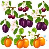 inställda olika frukter Arkivfoton