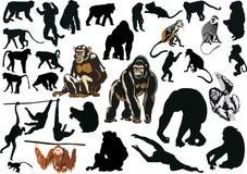 inställda olika stora apor vektor illustrationer