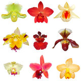inställda orchids Royaltyfria Foton