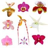 inställda orchids Royaltyfri Fotografi