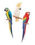 inställda papegojor också vektor för coreldrawillustration vektor illustrationer