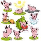 inställda piglets Royaltyfria Bilder