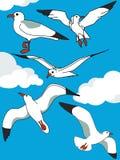 inställda seagulls Royaltyfria Bilder
