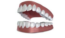 Inställda tänder öppnar isolerat Arkivfoto