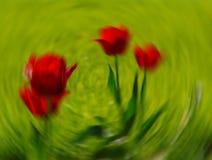 9 inställda underbara fjädertulpan för mood mångfärgade bilder Royaltyfri Foto