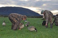 Inställning - upp lockfåglar Royaltyfri Bild