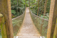 Inställningsbro i skogen Arkivfoto