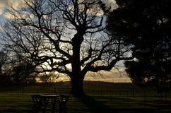 Inställningssol över det engelska landskapet Royaltyfri Fotografi