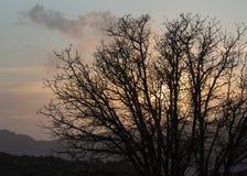 Inställningssol som döljas av moln bak ett kalt träd för vinter Arkivbild