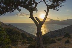 Inställningssolen till och med träden Krim September arkivbild