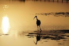 Inställningssolnedgång afton Fågel i ett tidvattens- damm på havkusten Royaltyfria Bilder