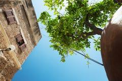 Inställt orange träd i Jaffa, Israel Royaltyfri Foto