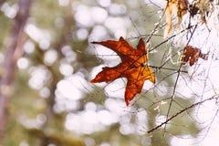 inst?lld leaf arkivfoto