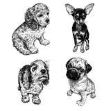 inst?llda gulliga valpar Terrier, spaniel och mops Svartvit handteckning royaltyfri illustrationer