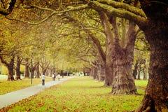 Instagram-Allee von Bäumen Stockbilder