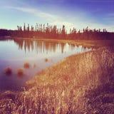 Instagram av den fridsamma sjön som omges av gräs och träd Arkivfoto