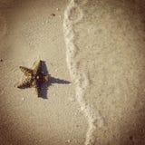 Instagram av den härliga sjöstjärnan på stranden Arkivbilder