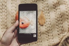 Instagram blogging concept. hand holding phone and taking photo. Of pumpkin and leaf on warm sweater,rustic background top view. halloween or thanksgiving stock photo