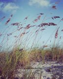 instagram de la escena inspirada i de la playa Foto de archivo