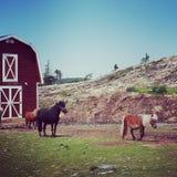 Instagram des poneys miniatures Photographie stock libre de droits