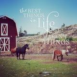 Instagram des poneys miniatures avec la citation inspirée Image stock