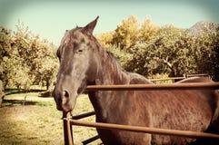 Instagram häst Royaltyfri Bild
