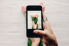 Instagram photographer, blogging workshop concept. hand holding. Phone and taking photo of stylish flower flat lay. pink tulips on white wooden rustic Royalty Free Stock Photo